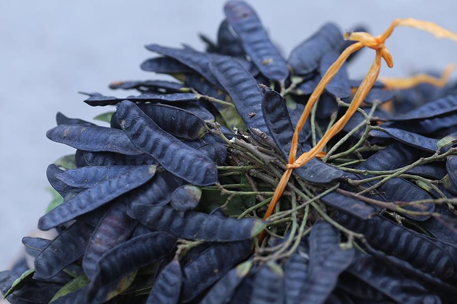 Bồ kết - thảo dược được sử dụng từ ngàn xưa